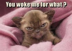 Funny Animal Pictures Of The Day – 22 Pics Source by streunermieze videos wallpaper cat cat memes cat videos cat memes cat quotes cats cats pictures cats videos Funny Animal Jokes, Funny Cat Memes, Cute Funny Animals, Cute Baby Animals, Funny Cute, Funny Dogs, 9gag Funny, Memes Humor, Funniest Animals
