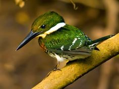 10 Striking Green-colored Birds ~ Amazing Animals