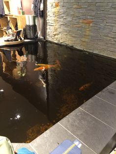 Indoor fish pond