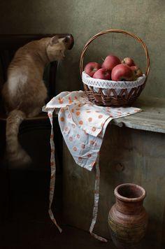 photo: ...и кот | photographer: Диана | WWW.PHOTODOM.COM