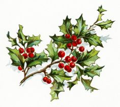 vintage christmas flower, holly and berries image, vintage floral clipart, old…
