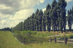 Check out Row of trees by Patricia Hofmeester on Creative Market