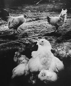 Sergey Vasiliev - 1983 Photo Contest | World Press Photo