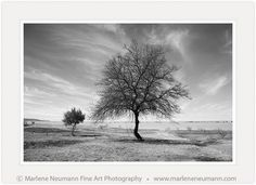 Marlene Neumann is a Master Photographer who intuitively captures the emotion in a landscape, beyond the camera.Her Black and White photographs are timeless Black And White Tree, White Sky, Fine Art Photography, Landscape Photography, Nature Photography, Easy Healthy Dinners, Healthy Dinner Recipes, Night Sky Moon, Tree Story