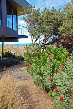 Hugging The Coast - Australia's leading garden designer Jim Fogarty says coastal gardens are all about working with nature, rather than trying to fight. Coastal Gardens, Beach Gardens, Lush Garden, Garden Beds, Australia Beach, Beach Color, Beach Landscape, Flowering Vines, Planter Boxes