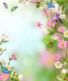 Spring Backdrop pink flowers and butterfly by BestBackdropCenter