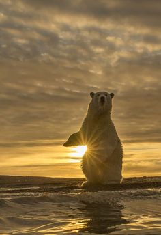 Sunrise on Beaufort sea by Kyriakos Kaziras