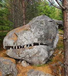 This 6 ft rock beside a nearby jogging trail looks like a T-Rex head. Minerals And Gemstones, Rocks And Minerals, Ancient Aliens, Ancient Art, Statues, Nephilim Giants, Turn To Stone, Giant Tree, Mystery Of History