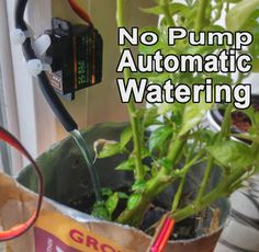 In this instructable I'm going to show you how you can make your very own automatic plant watering system. This solution requires no pump!The benefit of using an automatic watering system is that you avoid having your plants start to dry ou Aquaponics Greenhouse, Aquaponics Fish, Hydroponics System, Diy Greenhouse, Hydroponic Farming, Automatic Watering System, Plant Watering System, Watering Plants, Agriculture