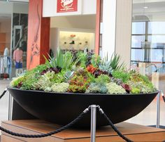 The Wok bowl is a sleek designer planter made from premium GRC – A composite material, consisting of a combination of high quality fiberglass and cement. Vertical Succulent Gardens, Succulent Landscaping, Succulent Gardening, Garden Terrarium, Garden Planters, Landscaping Ideas, Planter Pots, Succulent Bowls, Succulent Wall