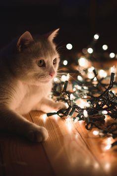 .Art On Sun: ♥ Christmas Cat ♥.