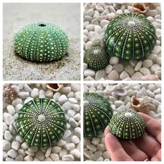 I am finally able to share with you a commission I have been working on. The request was for a sea urchin (kina) stone. Stone Art Painting, Seashell Painting, Cactus Painting, Dot Art Painting, Rock Painting Designs, Mandala Painting, Pebble Painting, Pebble Art, Rock And Pebbles