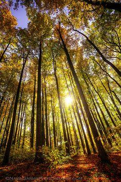 Shenandoah Sunlight Trees