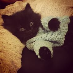 #Our #kitten #was #asleep #we #dressed #him #up #in #a #sweater #he #didnt #mind #continued #chilling 😺 #swag #cool #gangsta #kittensfarm Black Kittens, Chilling, Swag, Photo And Video, Sweater, Cool Stuff, Cats, Animals, Instagram