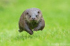 100 Wildlife Photographers you should follow - 121Clicks.com