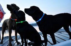 Photobucket. Glowdoggie ™ LED collares abren posibilidades completamente nuevas para los dueños de perros por la noche. Tome sus perros al parque y todavía verlos durante cientos de metros. Dejarlos sin correa en su propiedad y nunca temer perder de vista. O caminar a lo largo de calles de la ciudad con confianza, sabiendo que el tráfico de las ve, y por lo tanto se ve también.