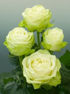 <3 green flowers