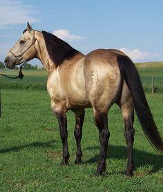 Mr. Junewood   KeSa Quarter Horses