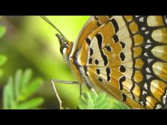 Mark O'Connor's 'Butterfly's Day Out'  Featuring Yo-Yo Ma - Cello, Edgar Meyer - DoubleBass and Mark O'Connor - Mandolin