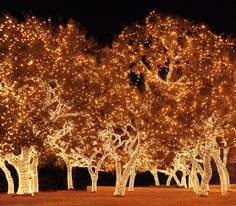 Johnson City, Texas Christmas lights. Totally worth the drive from Austin.