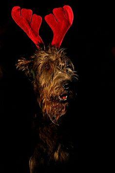 Knapp vorbei ist auch daneben, ... ja so geht es oft im Leben, doch wer nicht kommt zur rechten Zeit, bekommt auch keinen Weihnachtsstreit. :-)
