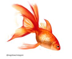 Finished goldfish painting I did in practise for my FNP (: