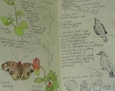 nature journal - Google Search