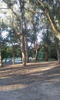 Parque Miguel Lillo