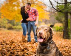 © The Story Photography | Daily Dog Tag | Chesapeake Bay Retriever