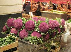 """""""Farbiger Blumenkohl ist ernährungsphysiologisch wertvoller als der übliche, weiße Blumenkohl. Er ist jedoch in Deutschland am Markt nur selten anzutreffen. In Sizilien z.B. ist der violette Blumenkohl weit verbreitet und sehr beliebt. Viele Verbraucher in Mitteleuropa wissen nichts von den gesundheitlichen, geschmacklichen und die umweltrelevanten Vorteilen des farbigen Blumenkohls."""""""
