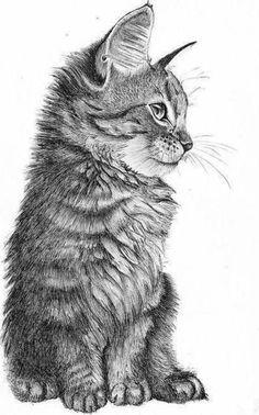▷ 1001 + Ideas for DIY Art - Learn to Draw with Pencil .- ▷ 1001 + Ideen für DIY-Kunst – mit Bleistift zeichnen lernen ▷ DIY Art Ideas – Learning to draw with a pencil draw. Landscape Pencil Drawings, Realistic Pencil Drawings, Pencil Art Drawings, Cat Drawing, Pencil Sketch Art, Drawing Ideas, Realistic Sketch, Pencil Sketching, Easy Drawings Sketches