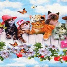 digiprint cats / kissat
