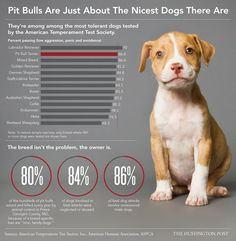 Why It's Ridiculous People Still Think Pit Bulls Are Inherently Mean (INFOGRAPHIC)