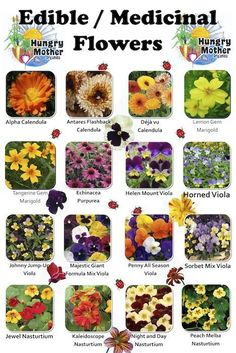 How to enjoy edible flowers For centuries, humans have been using flowers to enhance the appearance, presentation and flavor of food. In fact, Eco Centric reported that roses have a longstanding history as a garnish as well as candy. Rosewater is stil. List Of Edible Flowers, Eatable Flowers, Healing Herbs, Medicinal Plants, Poisonous Plants, Edible Wild Plants, Flower Food, Wild Edibles, Edible Garden
