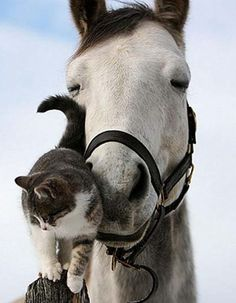 look at that sweet horses eyes !   Horse and Cat Friends