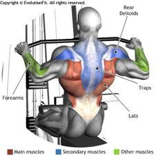 WIDE GRIP LAT PULLDOWN - This exercise focuses on latissimus dorsi muscle and involves also the rear deltoid and the central part of the traps as secondary muscles. The exercise involves additional muscle such as the forearms and the biceps. Fitness Workouts, Fitness Tips, Fitness Motivation, Health Fitness, Fitness Outfits, Fitness Planner, Fitness Quotes, Fitness Goals, Yoga Pilates