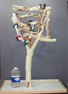 Manzanita Trees And Activities On Pinterest