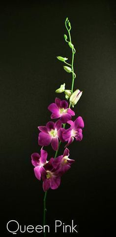 Pink Dendrobium Orchid Wholesale Bulk  #corsage #decorations #flowers #decor #bouquets #centerpiece #roses #holidays #wedding #mothersday