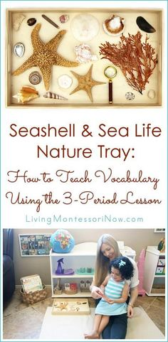 Seashell & Sea Life Nature Tray: How to Teach Vocabulary Using the Lesson The Montessori lesson is perfect for teaching vocabulary for nature trays and other activities. See the seashell & sea life nature tray and Montessori Trays, Montessori Science, Montessori Practical Life, Montessori Education, Montessori Toddler, Toddler Activities, Preschool Activities, Ocean Activities, Teaching Vocabulary