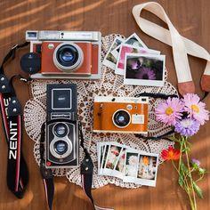 Photographer: IG@simonesavo   Camera: InstantFlex TL70 2.0   Film: Fujifilm Instax mini film   Rolleiflex   travel   instant   camera   photo   close up   flower   sunshine
