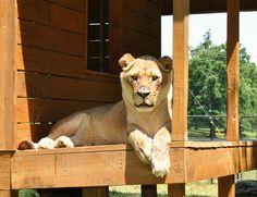 Handsome, aren't I? www.noahs-ark.org