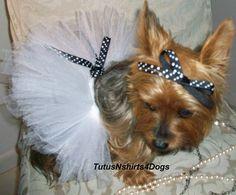 haha! Handmade Posh Dog Tutu - Dog Tutus - Dog Wedding Dress - Dog Clothes. $21.99, via Etsy. Cute Little Animals, Little Dogs, Cutest Animals, Dog Wedding Dress, Dog Tutu, Cute Dog Clothes, Dachshund Love, Dog Sweaters, Yorkies