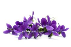 Leading supplier of Violet floral wax in bulk and wholesale quantities for soaps, lip balms, cosmetics and formulations. High quality Rose wax supplier in United States Violet Tattoo, Flower Chart, Sweet Violets, Violets Flower, Shades Of Violet, Photo Libre, Flower Quotes, Little Plants, Edible Flowers