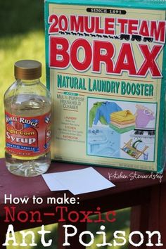 How to Make Non-Toxic Homemade Ant Poison