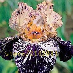 50pcs/bag pink iris seeds, bearded iris seeds, rare bonsai iris Phalaenopsis Orchid flower seeds, Nature plants for home garden