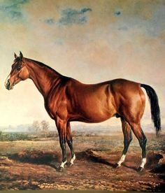 119 Best Antique Or Vintage Equestrian Prints Images Horses
