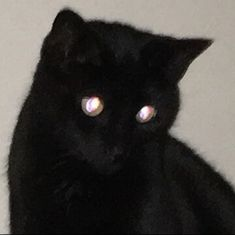 we love cats. Alluka Zoldyck, Grunge, Night In The Wood, Cat Memes, Cool Cats, Creepy, Dog Cat, Witch, Cute Animals