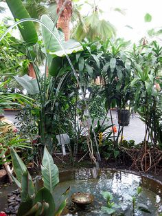 This is the original shot of one of the fountains inside Navy Pier's indoor garden. I plan on doing some editing to bring out the stream of water and soften the leaves surrounding this interesting fountain.     green houses are going to improve our value of life.