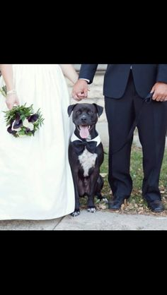 Bride and groom with dog ring bearer  #pitbull #love #wedding Desiree Martin Photography