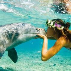 Swimming in the crystal clear blue beach sea ocean water of Hawaii with dolphins and a lei - travel explore the world go on adventure